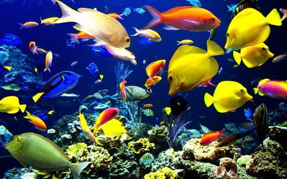 美丽水下世界拼图(2)